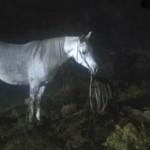 3480-08-equus