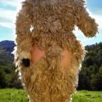 4296-03-sheepandtheranchhand