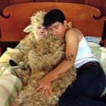 4296-06-sheepandtheranchhand