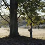 4111-03-arbreetlaforet