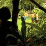 4594-16-insectsinthebackyard